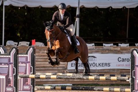 thoroughbred    Thoroughbred Horse for Sale in Ontario