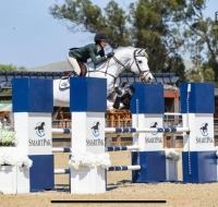 dutch-warmblood    Warmblood Horse for Lease in ca