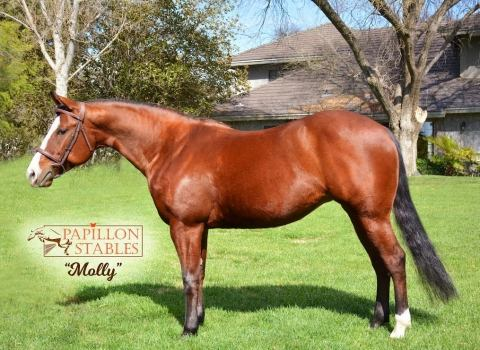 aqha-quarter-horse    Quarter Horse Horse for Lease in CA