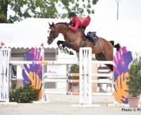 selle-francais    Warmblood Horse for Lease in CA